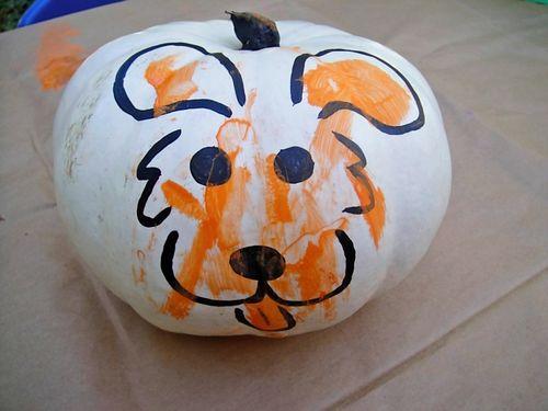 Quinn pumpkin